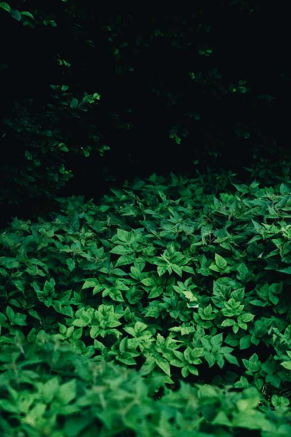 Woodland Plants That Bloom in Dappled Light Under Trees - our picture
