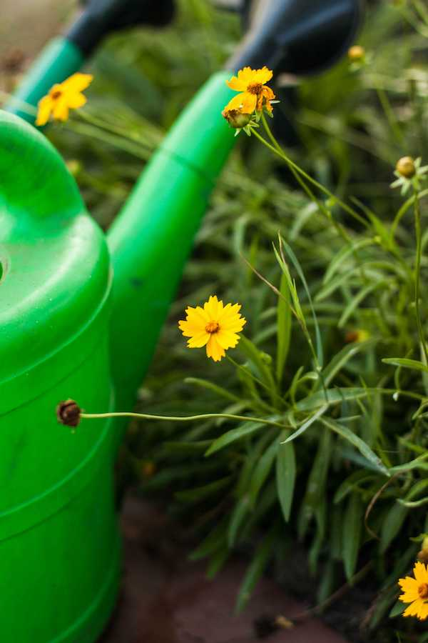Your First Garden: The Surprising (And Best) Reason to Start Composting - from our garden